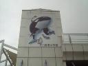 名古屋港水族館に来てます